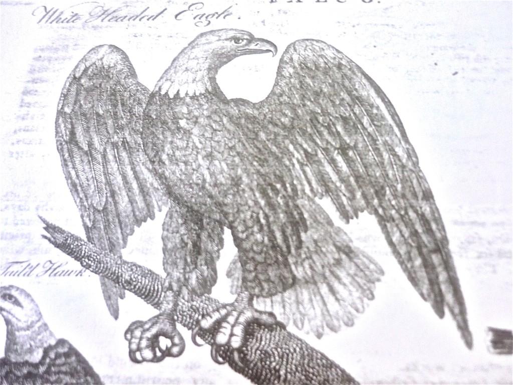 1792 Robert Scot Master Piece Eagle RJ Silversteins georgewashingtoninauguralbuttons.com O